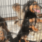 Over 50 dogs found caged in Prospect home
