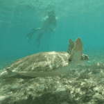 DoE seeks support for turtle plan