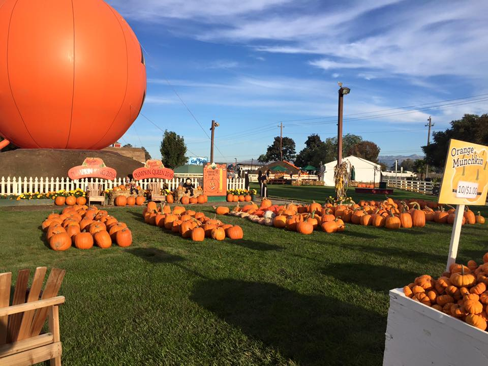 Best Pumpkin Patches Across the Bay Area
