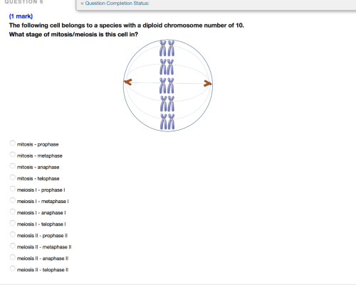 small resolution of question 6 question completion status 1 mark the following cell belongs to a