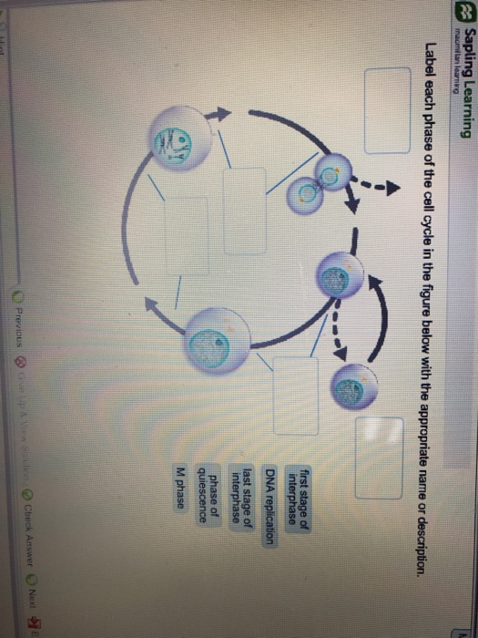 mitosis and meiosis stages diagram big tex trailer wire 10sr wiring 12lx solved: question 59 of 79 map sapling learning label the c... | chegg.com