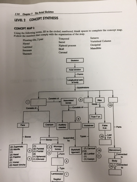 concept map skeletal system diagram headlight switch wiring for a 1993 ford f150 solved 130 chapter7 the axial skeleton level 2 sy synthesis using following terms