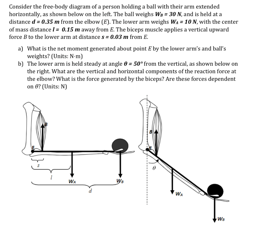 hight resolution of consider the free body diagram of a person holding a ball with their arm extended
