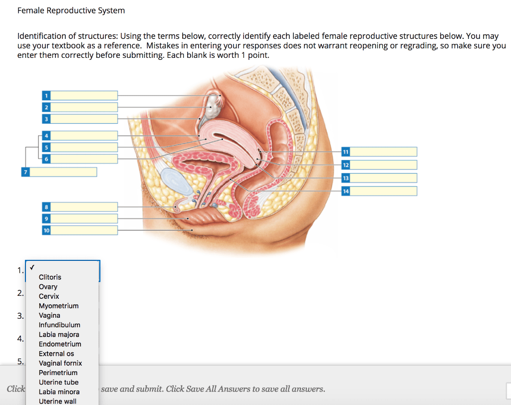 hight resolution of female reproductive system identification of structures using the terms below correctly identify each labeled