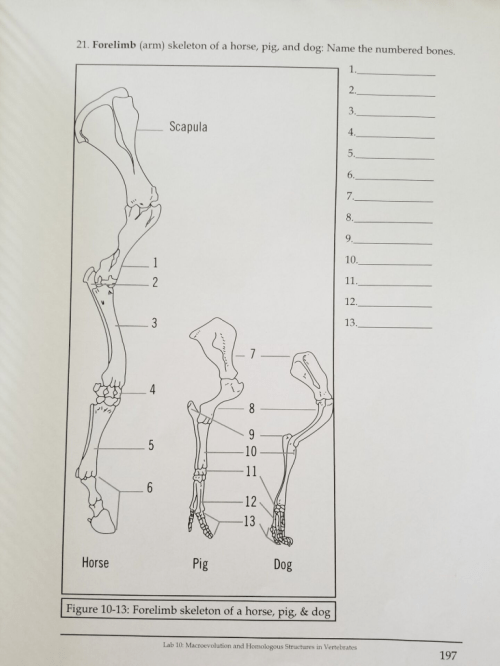 small resolution of forelimb arm skeleton of a horse pig and dog