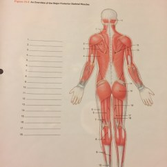 Major Muscle Diagram To Label 7 Pin Wiring Trailer Solved Review Practice Sheet 2 Each In Fig Figure 19 9 An Overview Of
