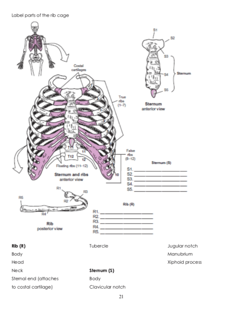 small resolution of label parts of the rib cage s1 4sternum true anterior view false t12 sternum s