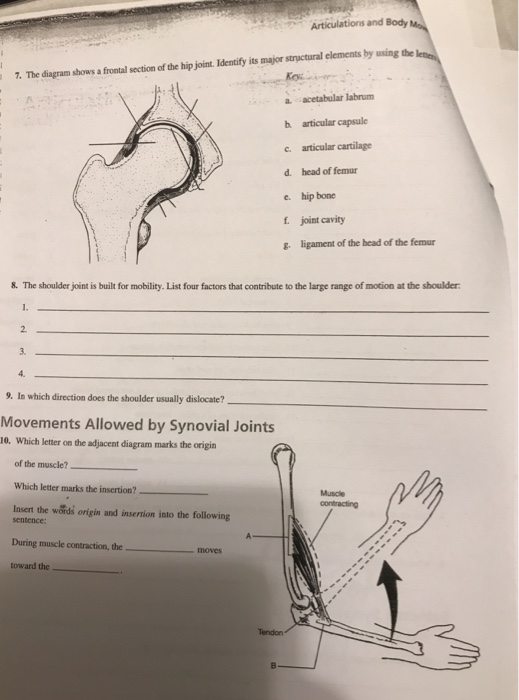 movements allowed by synovial joints diagram free car wiring diagrams solved: the shows a frontal section of hip joi... | chegg.com