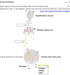 regulation of sex hormones aa aa the following diagram depicts the hormonal activities that  [ 1024 x 790 Pixel ]