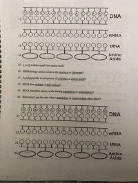"""Solved: Date: Protein Synthesis Worksheet Directions: 1"""" F ..."""