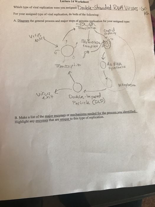 virus diagram worksheet unvented hot water system wiring solved lecture 14 which type of viral replicati replication were you assigned for your