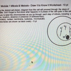 Meiosis Diagram Worksheet Wiring For Bathroom Extractor Fan Solved Module 1 Mitosis Draw Itto Know It Work 10 Pt Using The