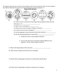 The Cell Cycle Worksheet Answers Worksheets For School ...