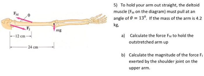 pull up muscles worked diagram ford escape power steering solved to hold your arm out straight the deltoid muscle fm 12 cm 24 mg 5