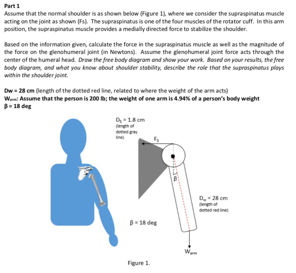 medium resolution of part 1 assume that the normal shoulder is as shown below figure 1