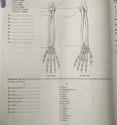 question questions 17 25 identify the bone markings labeled in the following diagrams color the bones wi  [ 768 x 1024 Pixel ]