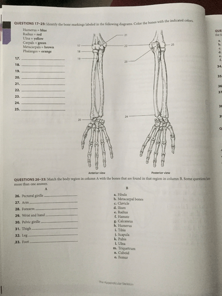 hight resolution of question questions 17 25 identify the bone markings labeled in the following diagrams color the bones wi