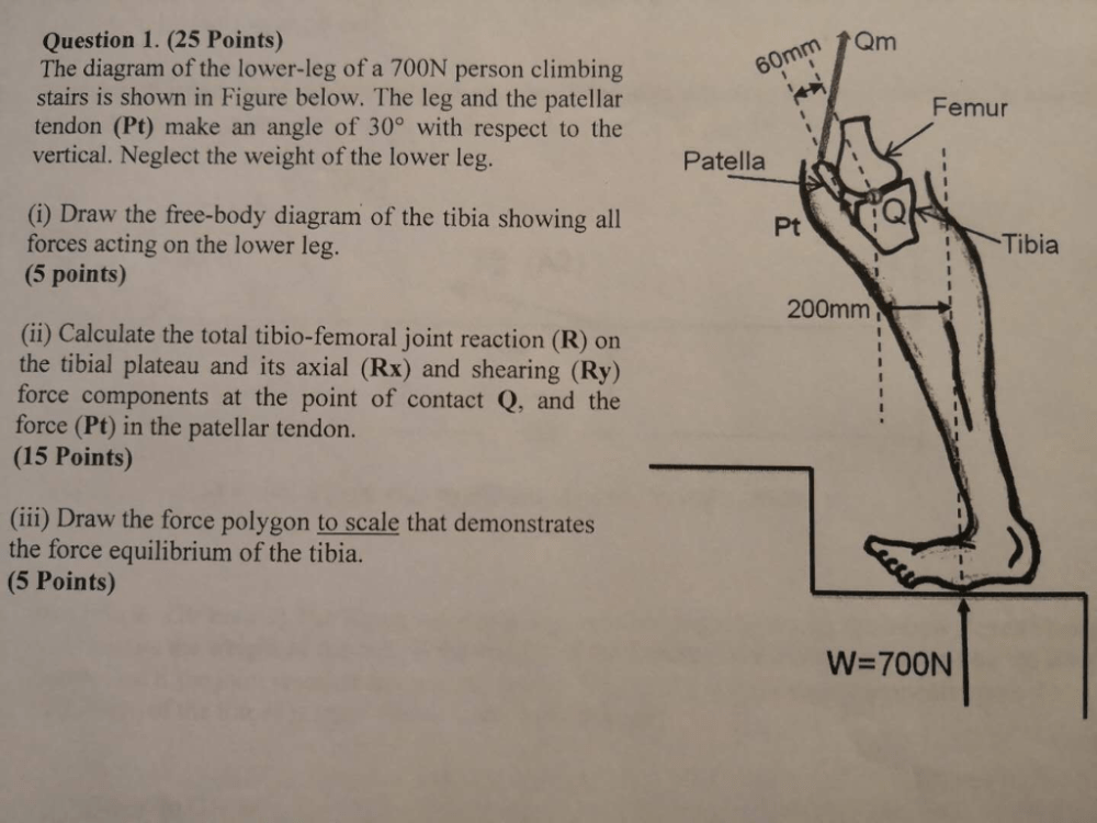 medium resolution of  25 points the diagram of the lower leg of a