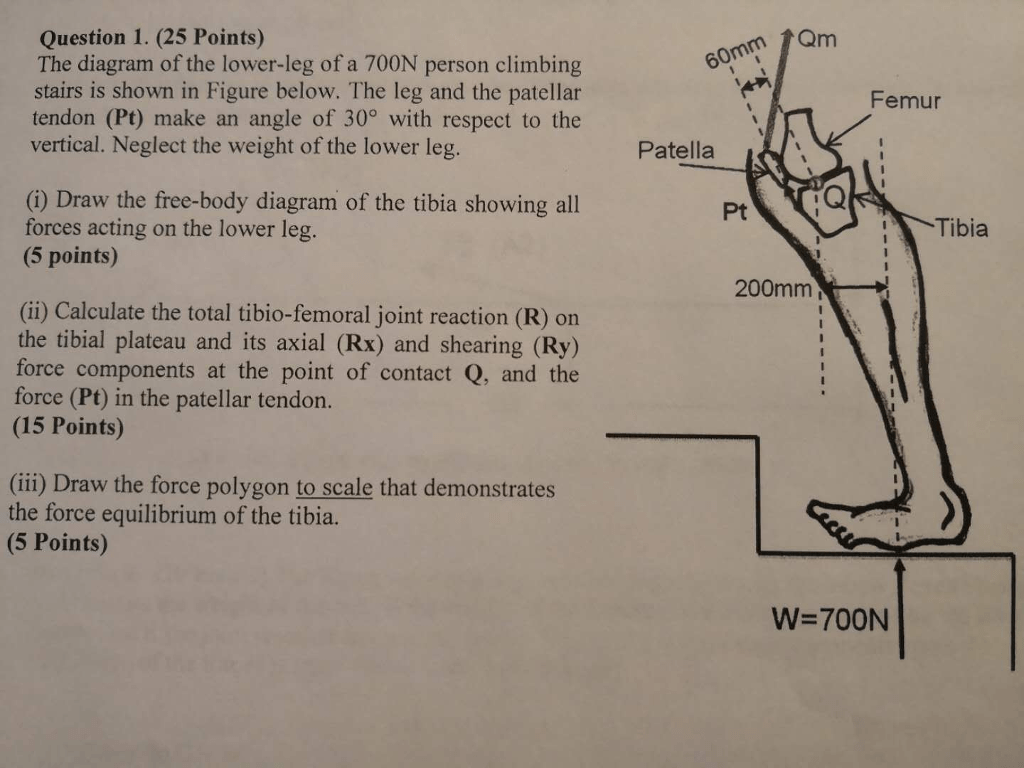 hight resolution of  25 points the diagram of the lower leg of a