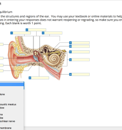question 1 hearing and equilibrium labeling label the structures and regions of the ear  [ 1024 x 771 Pixel ]
