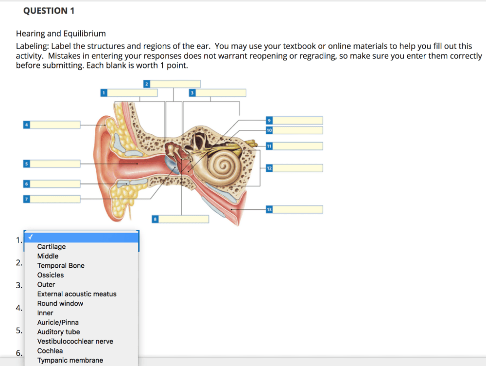 medium resolution of question 1 hearing and equilibrium labeling label the structures and regions of the ear