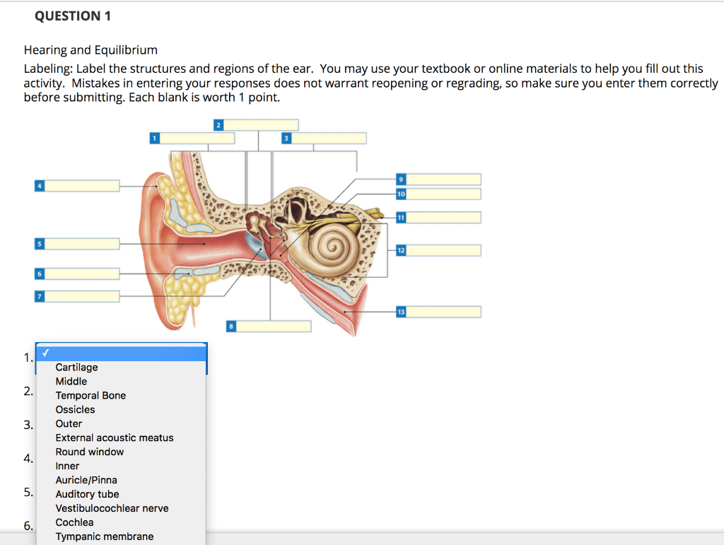 hight resolution of question 1 hearing and equilibrium labeling label the structures and regions of the ear