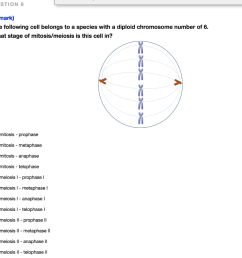 question 1 mark the following cell belongs to a species with a diploid chromosome [ 1024 x 948 Pixel ]