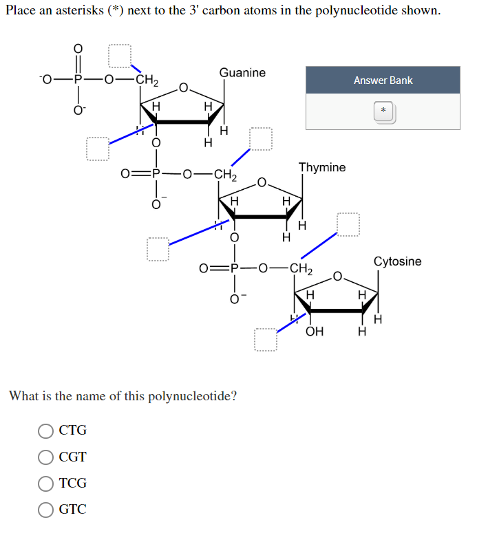 Solved: Place An Asterisks (*) Next To The 3' Carbon Atoms
