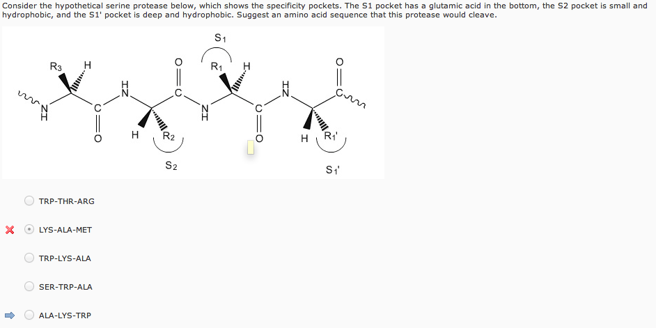 Consider The Hypothetical Serine Protease Below