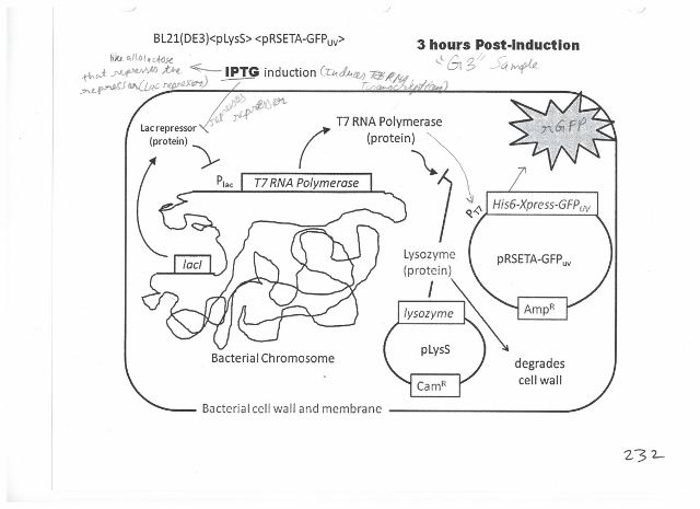 Can Someone Explain What Is Going On In This Diagram