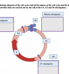 label the following diagram of the cell cycle with all the phases of the cell cycle [ 1024 x 814 Pixel ]