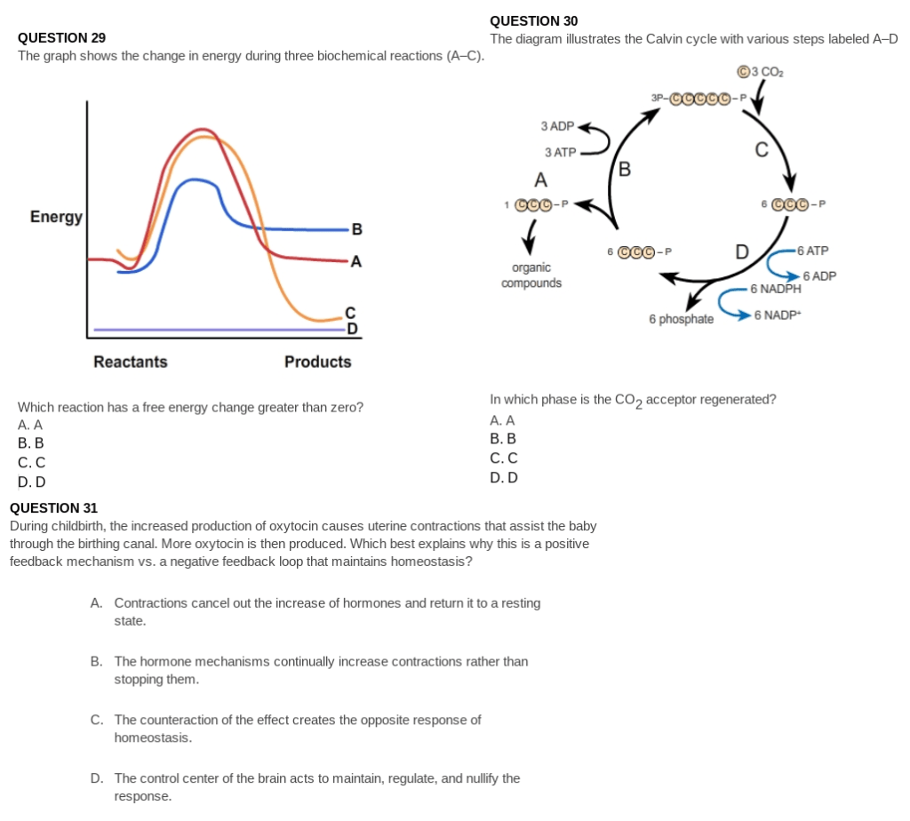 Labeled Atp Cycle Diagram