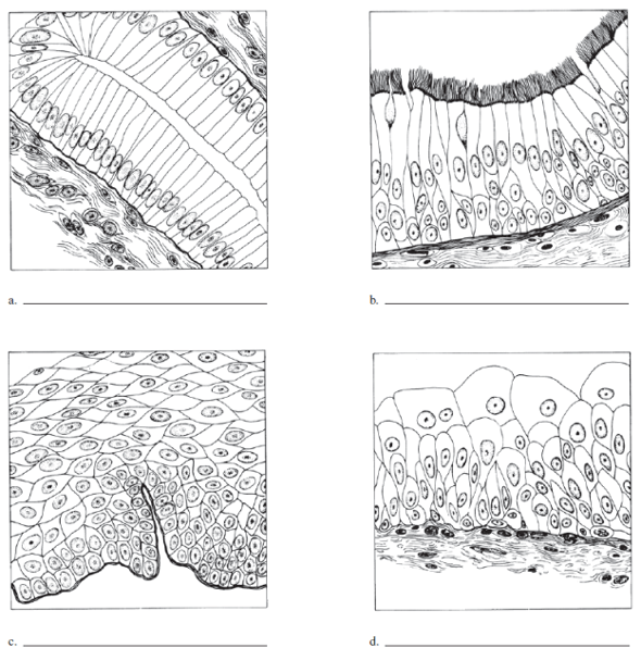 Write the name of each tissue type in illustrations a t