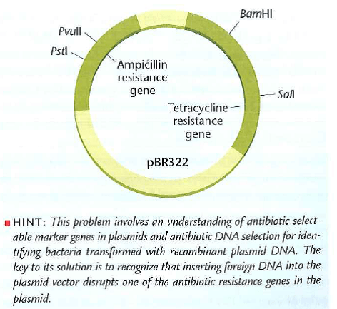 Solved: An ampicillin-resistant, tetracycline-resistant