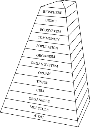 Definition of The Pyramid Of Life (levels Of Biological