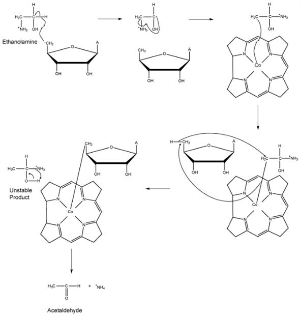 Solved: Extending the mechanism of methylmalonyl-CoA