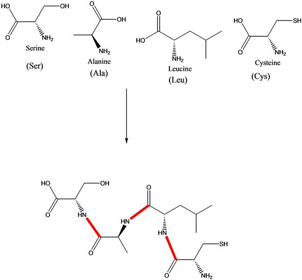Solved: Draw a structure for each tetrapeptide. a. Ser-Ala
