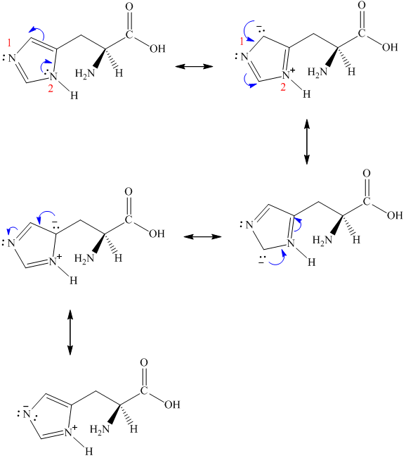 Solved: Histidine is classified as a basic amino acid