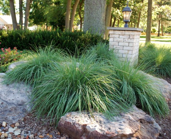 tired of lawn care reduce grass
