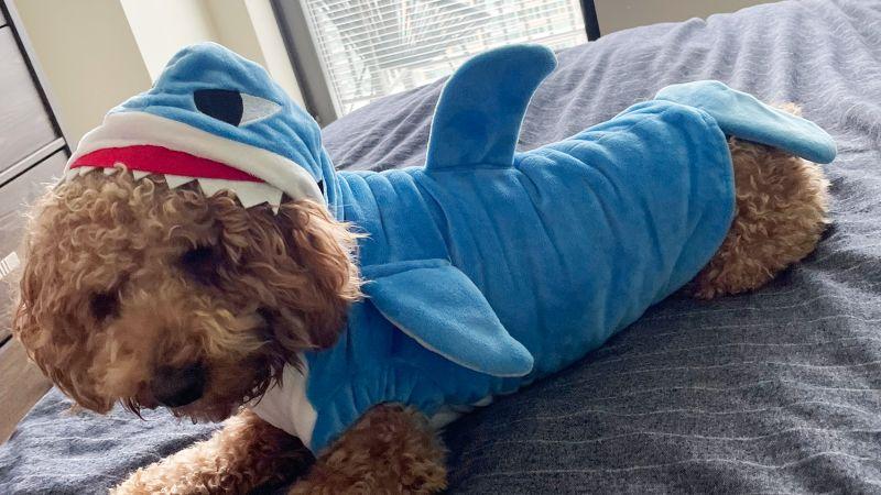 Mogoko Funny Dog Shark Costume