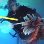 First cull of the year in effort to tame lionfish