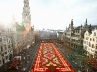 Giant Flower Carpet to Take Over Brussels Main Square ...