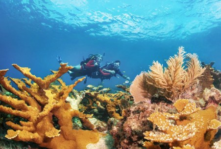 Image may contain Water Outdoors Human Person Nature Ocean Sea Animal Sea Life Reef Sport Sports and Diver