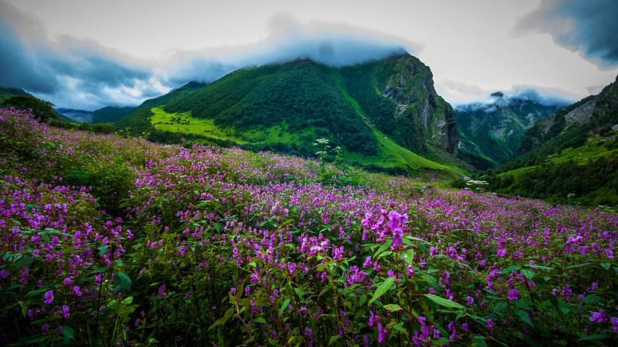 Image result for Uttarakhand - The Valley of Flowers in monsoon