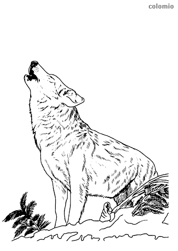 Coloring Pages Wolves : coloring, pages, wolves, Wolves, Coloring, Pages, Printable, Sheets