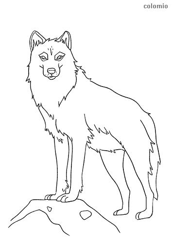 Wolves To Color : wolves, color, Wolves, Coloring, Pages, Printable, Sheets
