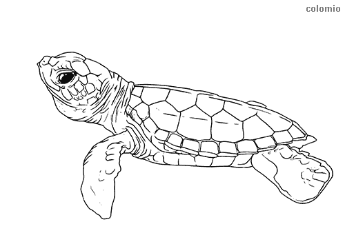 Zoo Animals Coloring Pages Free Printable Zoo Coloring Sheets