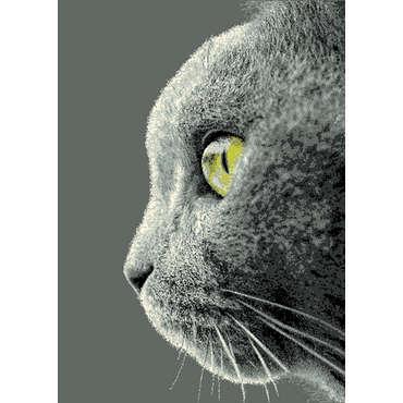 Tapis 120x170 cm gris BENGALE CAT coloris gris