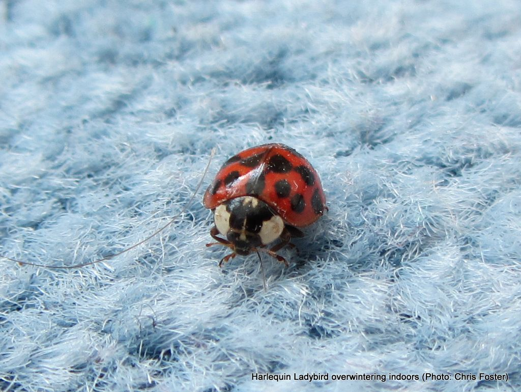 L Is For Ladybird