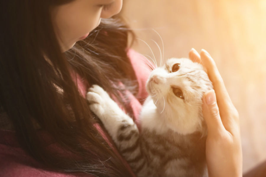 Cat people are indeed more likely to be single